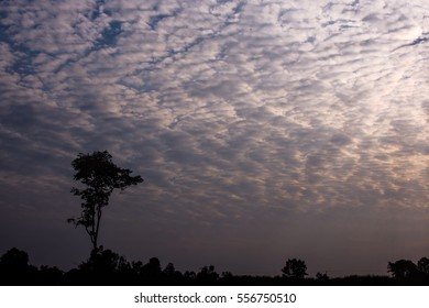 Silhouette of tree, sky and cloud with sunset.