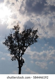 Silhouette tree with storm cloud and sky