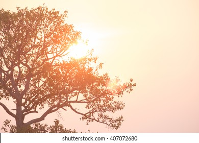 Silhouette of a tree with the sun behind the tree. In the evening, before sunset. abstract background.