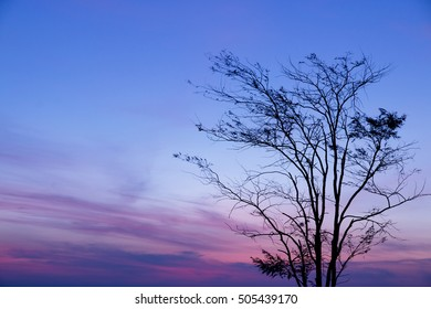 silhouette of tree with sunrise in the morning, dramatic stunning morning light