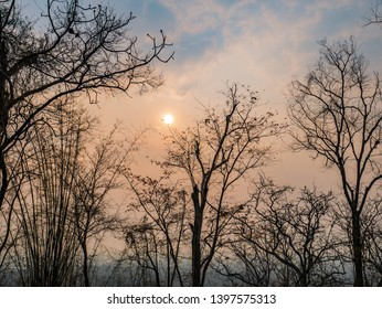 silhouette Tree with Sunrise in the morning on Phu Kradueng mountain national park in Loei City Thailand.Phu Kradueng mountain national park the famous Travel destination