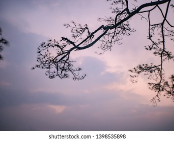 silhouette Tree with Sunrise in the morning on top of  Phu Kradueng mountain national park in Loei City Thailand.Phu Kradueng mountain national park the famous Travel destination