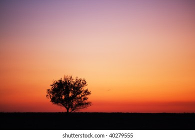 Silhouette of tree and sunset