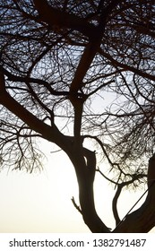 Silhouette tree at sunset background