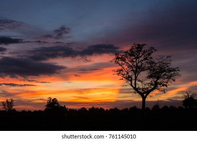 Silhouette of tree and sunset with copy space