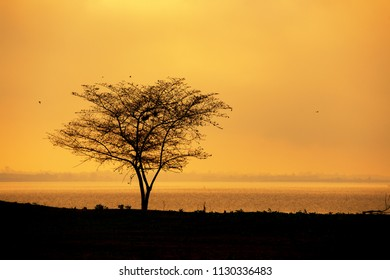Silhouette of tree in sunset golden hour riverside