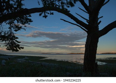 Silhouette of Tree in sunset from Rathtrevor Park looking East, Parksville, BC, Canada