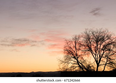 Silhouette of a tree and town against rising sun