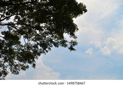 Silhouette of tree trunk with clouds and sky background