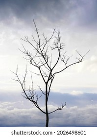 The silhouette of a tree without leaves on the background of a light sky with clouds