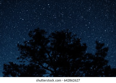 Silhouette of trees against the backdrop of night sky. Night sky with stars.