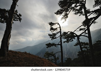 Silhouette of trees against mountainside and cloudy sky. Silhouette of pine trees against a dark gray cloudy sky with bright sun. View of rise mountainside of plateau Ai-Petri in Crimea in January.