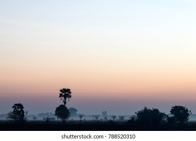 Silhouette of trees and coconuts grow on the Thai rice field, which has early morning fog.