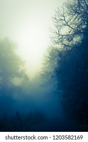 Silhouette of trees in dark, misty, mysterious forest, bright shine at horizon (copy space)
