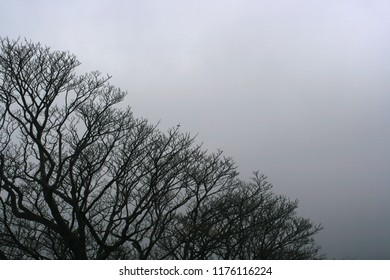 Silhouette of trees in a foggy, misty landscape.