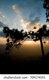 Silhouette trees forest