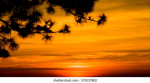 Silhouette of trees on sunset time