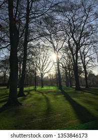 Silhouette of trees in park.