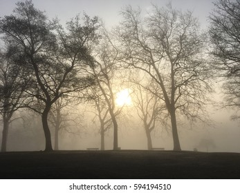 silhouette of trees with sunrise and mist