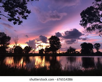 Silhouette of trees at sunset,