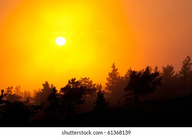 Silhouette of trees in sunset. Due to intense light background trees are lighter and coming towards the foreground trees get darker and darker. These form nice layers.