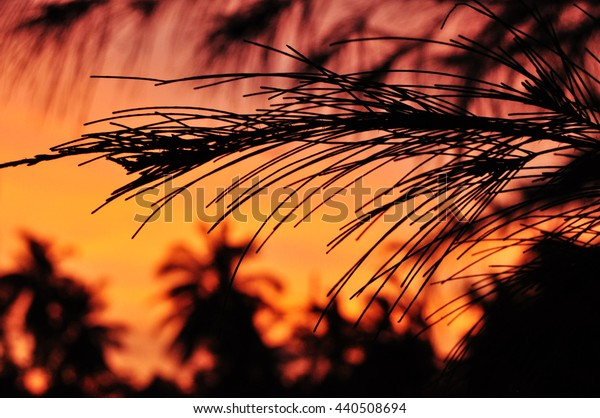 silhouette of trees in the sunset. orange sunset ambiance in the background.