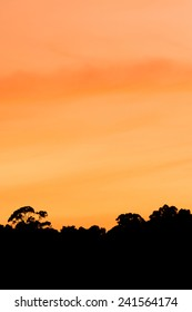 Silhouette of trees in sunset sky.