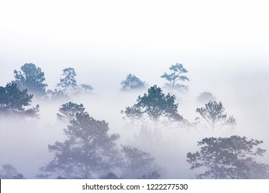 silhouette of tropical forest covered in morning fog. misty jungles on Thai mountain. white water vapour covered trees only outline can be seen.