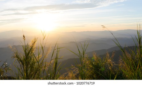 Silhouette of tropical grass on mountain during sunset