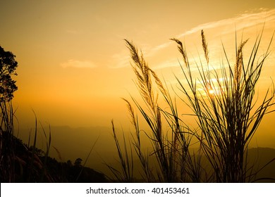 Silhouette of tropical grass over sunset mountain view