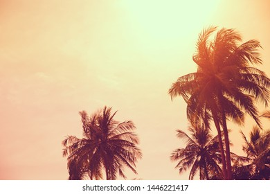 silhouette tropical palm tree against the sky during a tropical sunset. Summer vacation and nature travel adventure concept.