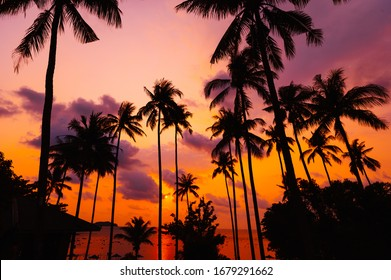 Silhouette tropical palm tree with sun light on sunset sky. Summ