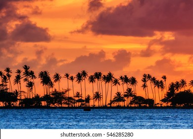 Silhouette of tropical palm trees during a beautiful sunset in the Caribbean in San Juan, Puerto Rico