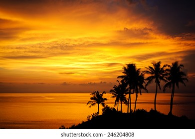 Silhouette of tropical palms during the magic sunset in Bali