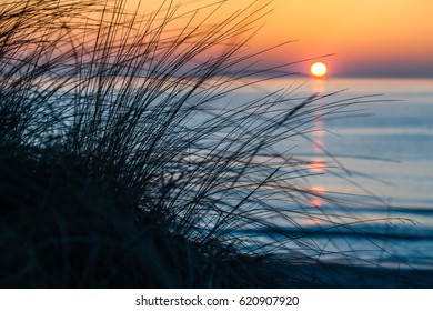 Silhouette tuft beach grass in front of blue sea sunset and orange sky horizon at Darss peninsula, Mecklenburg, Germany/Evening Mood at the Sea