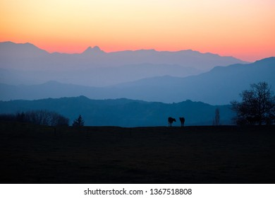 The silhouette of two cows is seen against layers of mountains during sunset in the Pyrenees Mountains of Spain