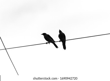 Silhouette of two Noisy Miner birds perched on an electrical cable