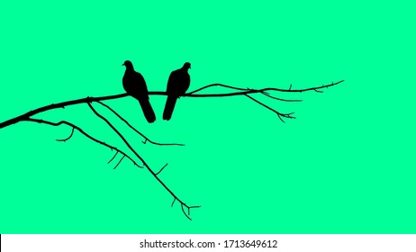 The silhouette of two pigeons perched on a branch With a green background