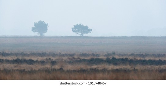 Silhouette of two pine trees in misty heather landscape.