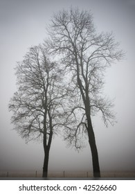 Silhouette of two trees on a very foggy day