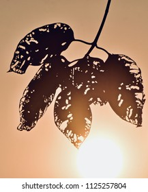 Silhouette unique tree leaves with bright sunlight background photograph