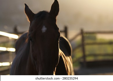 A silhouette view of a horse in a paddock.