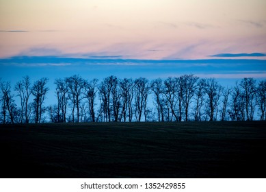 Silhouette of windbreak belt at subset with cloudy sky