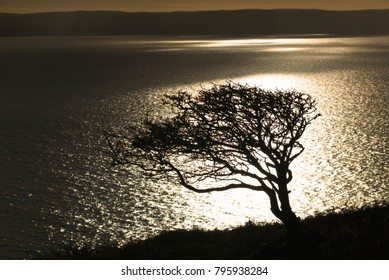 Silhouette of a windswept lone tree framed by sunlight on Brean Down, Somerset