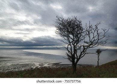 Silhouette of windswept trees on Brean Down, Somerset, England, looking out to sea
