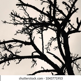 Silhouette of a withered tree without leaves.