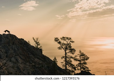 Silhouette of a woman in a nature environment standing on the top of a mountain making the yoga pose Wild Thing with the beautiful background of the sky in the warm colors of a sunrise