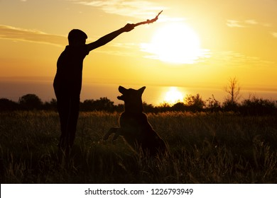 silhouette of a young man playing with a dog in a field at sunset, boy throwing a wooden stick and working out with pet the command to bring on nature, concept friendship of animals and people