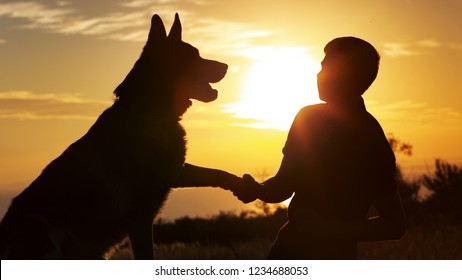 silhouette of a young man shaking paw his favorite dog in a field at sunset, boy with a purebred pet German Shepherd walking on nature, concept healthy lifestyle