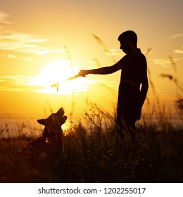 silhouette of a young man walking with a dog on the field at sunset, boy playing wooden stick with his pet on nature,  concept of active leisure,happy pastime and friendship with animals